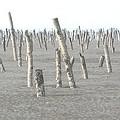 2000年工業區填海造陸,造成凸堤效應、泥沙淤積