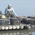 牡蠣養殖產的產值雖然不高,卻照顧到許多中老年弱勢族群