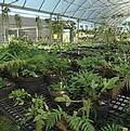 保種於溫室中的蕨類植物