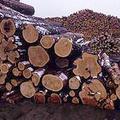來自俄羅斯卡瑞里亞地區的木材。圖片來源:Taiga Rescue Network