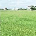 休耕的農田