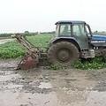 最後綠肥都會犁到土裡去