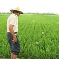 要恢復農地正常運作、幫助農人回到田裡種出自尊,休耕政策一定要調整