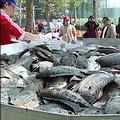 蓮池潭中大多都是吳郭魚和琵琶鼠