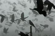 氣候變遷衝擊全球鳥類生態。圖片來源:路透社