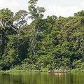 剛果民主共和國有世界第二大雨林區。圖片來源:Greenpeace