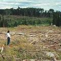 Grassy Narrows族傳統生活圈內的伐木後的狀況。圖片來源:Amnesty International Canada
