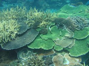珊瑚礁是海中熱帶雨林。圖片來源:陳昭倫。
