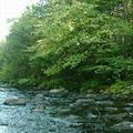 位於緬因州的河川緩衝區。圖片來源:Maine DEP