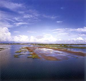 永安鄉的烏樹林鹽場。圖片來源:永安鄉公所網站