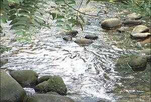 霄裡溪源頭。圖片來源:公視「我們的島」
