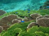 保育澎湖東西嶼坪的珍貴海洋生態,發展生態旅遊,是台灣環境資訊協會環境信託中心正在推動的工作計畫之一。