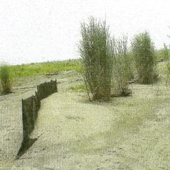 沙丘上植物自然生長情形