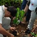 學生協助種植樹苗