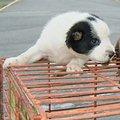 流浪狗生的幼犬;圖片來源:陽明山國家公園管理處