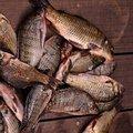 外來種魚類;圖片來源:陽明山國家公園管理處