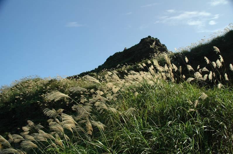 纖纖芒草,別名菅草。輕彈樸實基調,唱和生命尊榮。