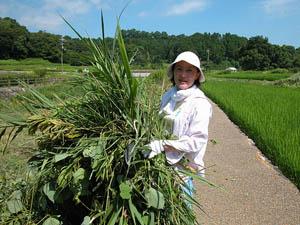 割除完的雜草要以短繩捆起,搬運到定點堆放。