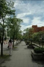 中研院正門入口處,花壇寶座上的樟樹。圖片來源:邱志郁