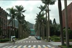 霸氣十足的椰林大道。圖片來源:邱志郁