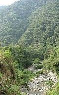 祕魯安地斯山脈的雲霧林(圖片來源:Ben Yehuda)