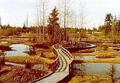 佩恩溼地銀行下的Narbeck溼地的開放式水域棲地(圖片來源:Paine Field)