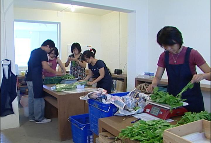 菜舖吸引許多朋友義務幫忙;圖片來源:我們的島