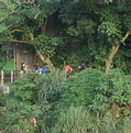 認識醉夢溪服務課程的學生在醉夢溪河堤沿線尋找動植物
