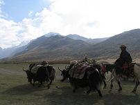 西藏仍有許多人過著放牧生活,以牛糞為燃料。圖片提供:林穆琳