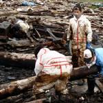 該市大船渡町中港的工業區一角,堆積著杉樹皮發酵後製成的土壤改良材「樹皮堆肥」。(圖片節錄自朝日新聞)