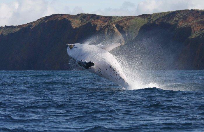 國際捕鯨委員會