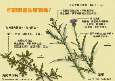你認識這些植物嗎?