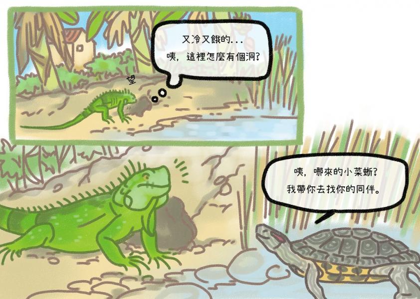 又冷又餓的我,正困惑於河岸土堤怎麼有個洞......此時遇到紅耳龜