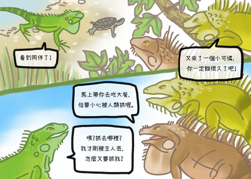 紅耳龜帶我認識其他綠鬣蜥