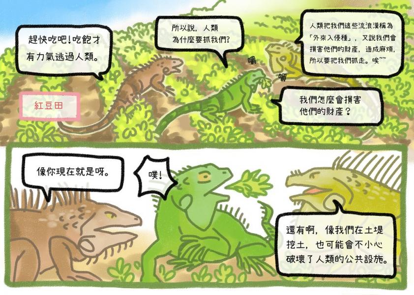 其他綠鬣蜥告訴我,我們在野外會損害人類的家園