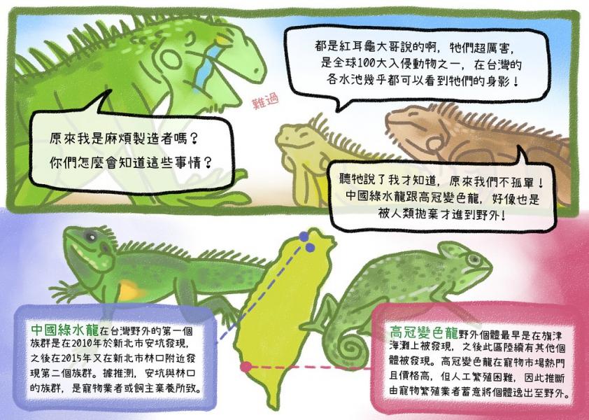 原來還有其他變成入侵種的爬寵分布在台灣