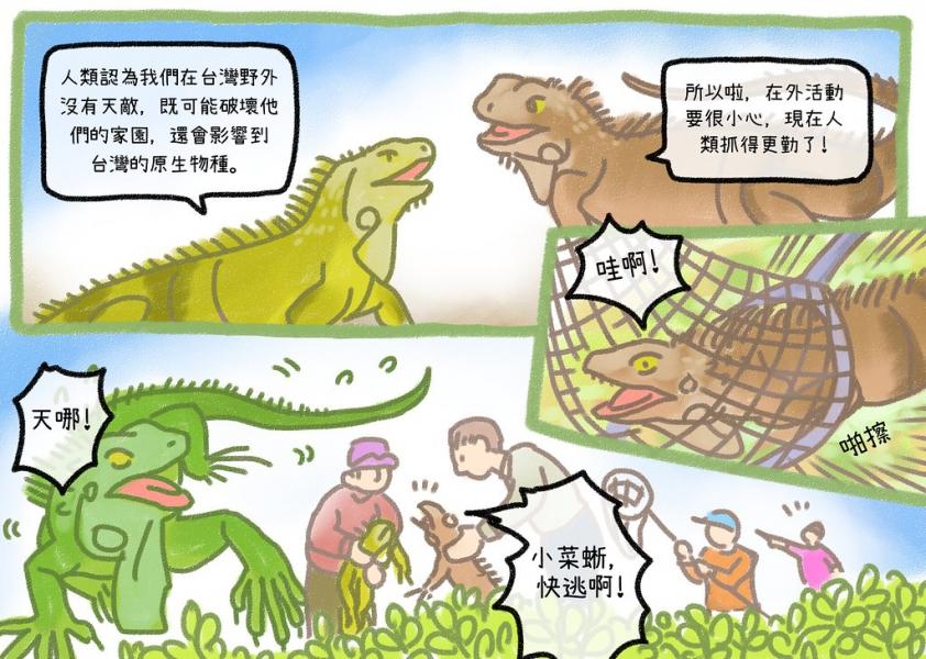 綠鬣蜥新朋友突然就被人類抓走了