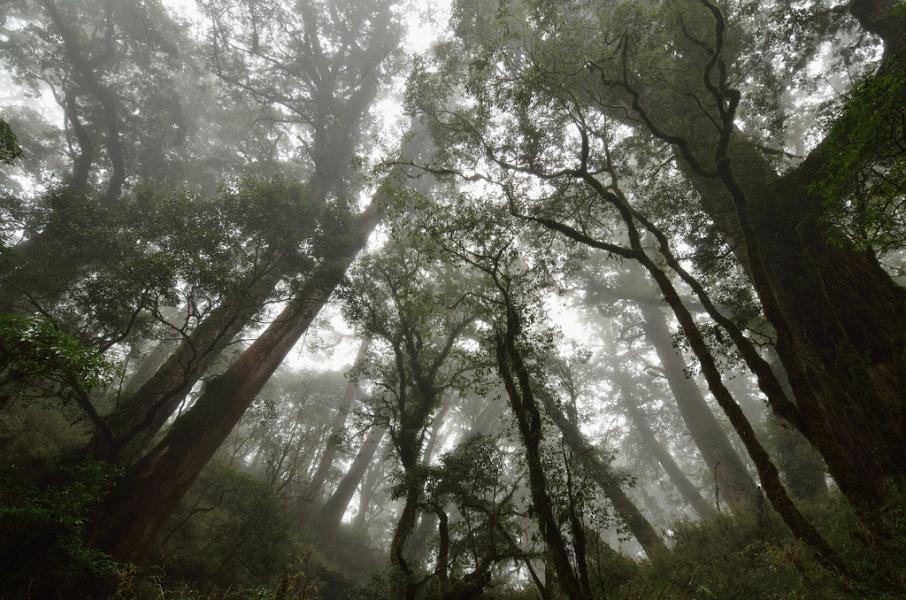 紅檜巨木群