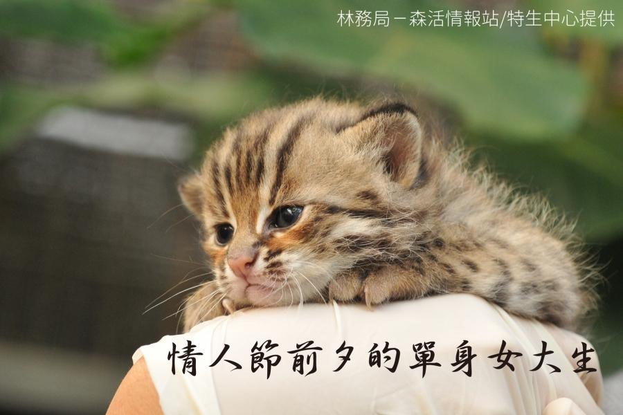 這是石虎。
