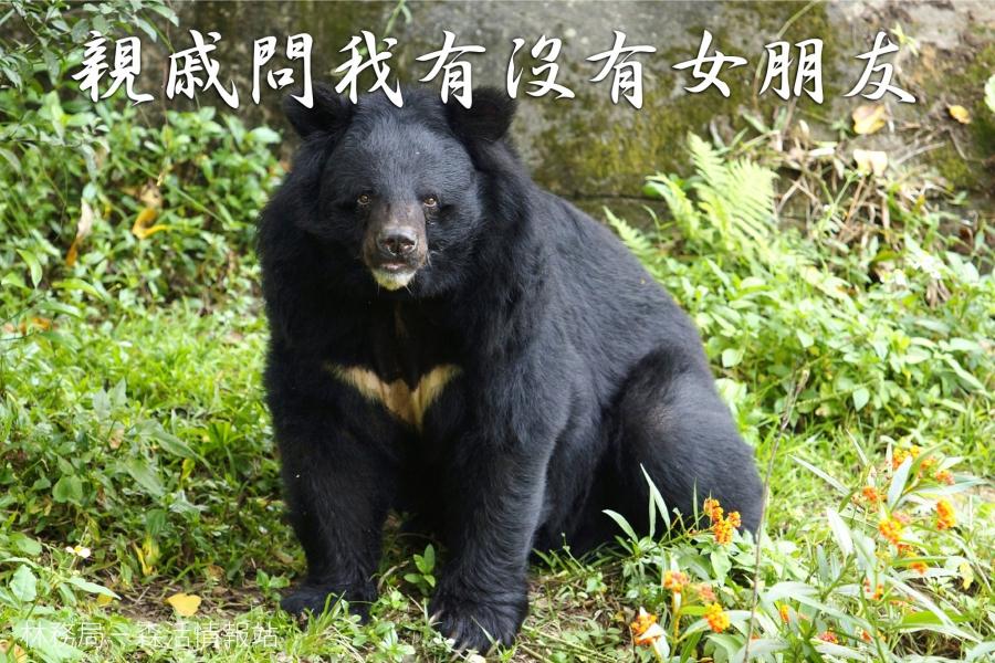 這是台灣黑熊。