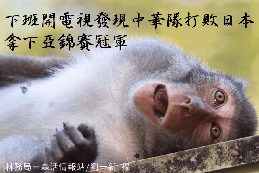 這是台灣獼猴。
