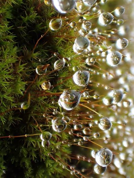 細雨紛飛, 在鋪滿苔蘚的山壁上,掛上一顆顆晶瑩剔透的水晶球, 小水晶球裡,又倒映著迷你的苔蘚森林, 願化身小螞蟻,穿梭在這夢幻世界。