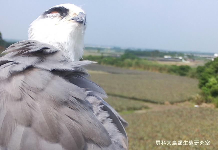 「風吹得好舒服」,攝影:屏科大鳥類生態研究室