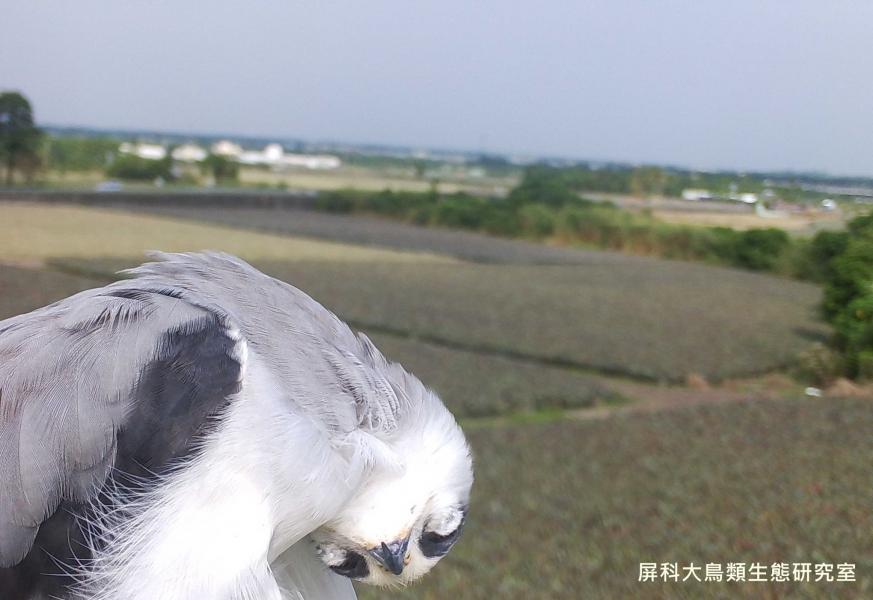「我要耍賴,不想出門!」,攝影:屏科大鳥類生態研究室