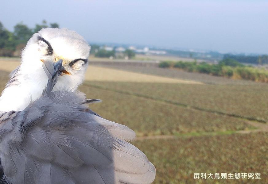 「今天心情很好喔」,攝影:屏科大鳥類生態研究室