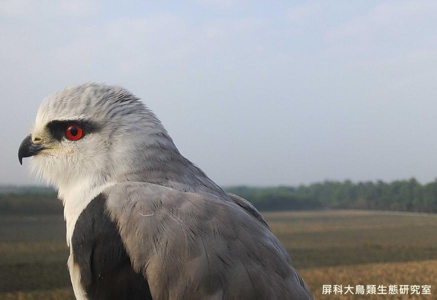 「來張歷經滄桑的帥照」,攝影:屏科大鳥類生態研究室