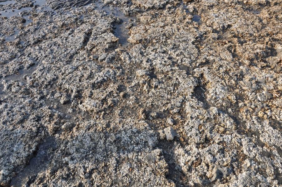 命案現場的藻礁有明顯輾壓剷除的痕跡,與原始崎嶇不平形成對比