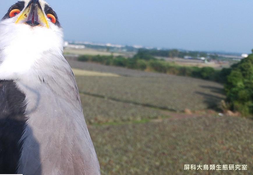「你說什麼!」,攝影:屏科大鳥類生態研究室