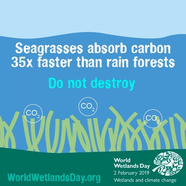 海草吸收碳的速度,是雨林的35倍。