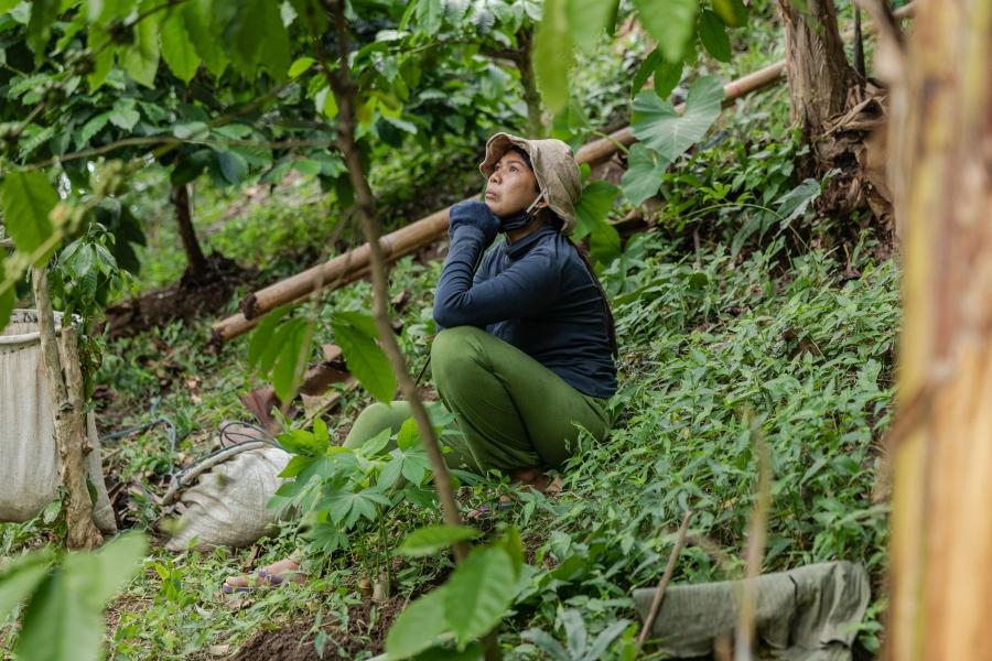 37歲的按摩治療師Ni Nyoman Ayu Sutaryani,在5月疫情大流行之間被解僱。她回到老家山區塔巴南攝政區蒙德(Mundeh)和父母同居,並幫他們收穫丁香和水果。(印尼,峇里島,2020年6月)。攝影:Nyimas Laula